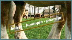 huisje-boompje-paardje.jpg